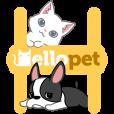 헬로펫 - 폰화면에 강아지 고양이 키우기