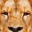 Bronx Zoo App
