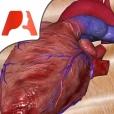Pocket Heart - 인터랙티브 순환기내과