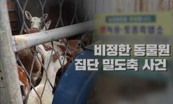 비정한 동물원, 집단 밀 도축 사건